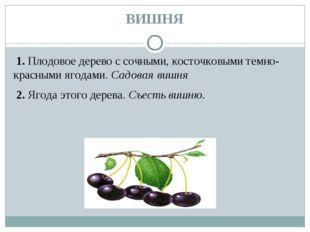 ВИШНЯ 1.Плодовое дерево с сочными, косточковыми темно-красными ягодами.Сад