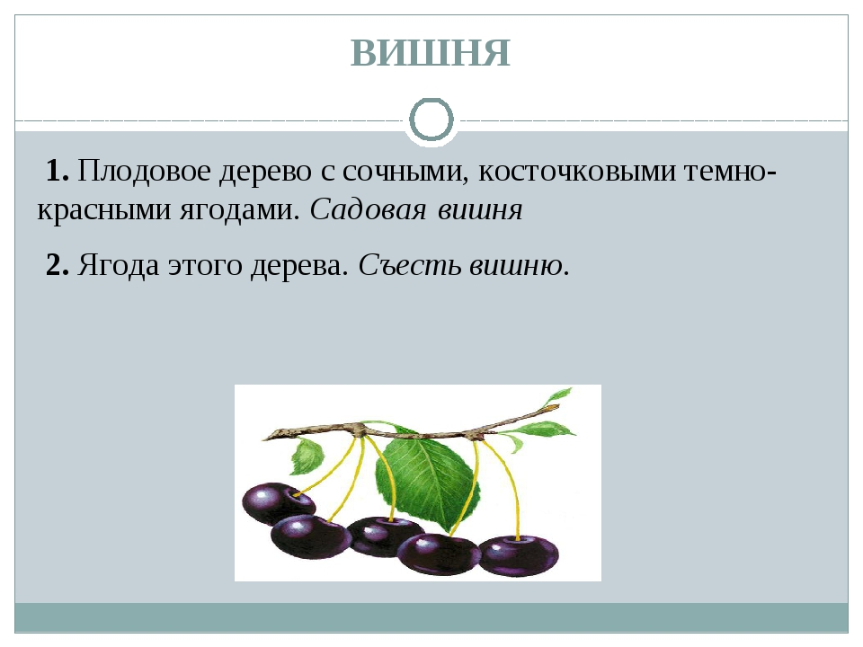 ВИШНЯ 1.Плодовое дерево с сочными, косточковыми темно-красными ягодами.Сад...