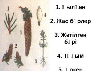 VIII. Қорытындылау: 1. Ашық тұқымдылар мен споралы өсімдіктерінің айырмашылығ