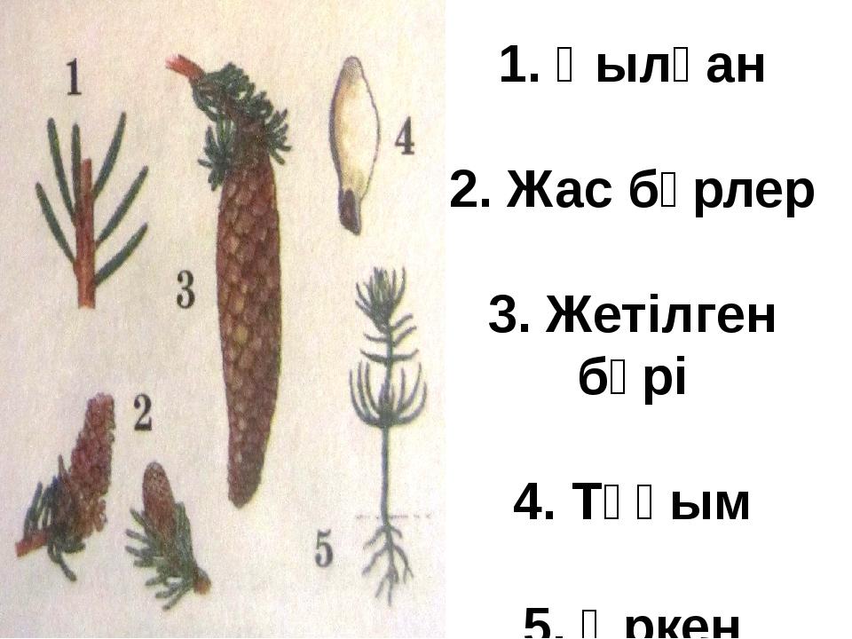 VIII. Қорытындылау: 1. Ашық тұқымдылар мен споралы өсімдіктерінің айырмашылығ...
