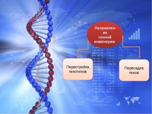 Направление генной инженерии Перестройка генотипов Пересадка генов