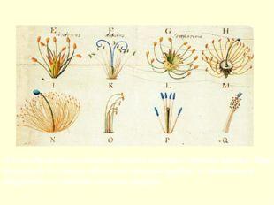 А в основу системы растений Линней положил строение цветка. Круг замкнулся —