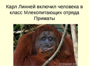 Карл Линней включил человека в класс Млекопитающих отряда Приматы