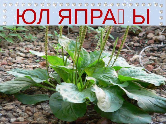 ЮЛ ЯПРАҒЫ