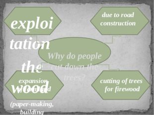 Why do people cut down the trees? exploitation the wood (paper-making, build