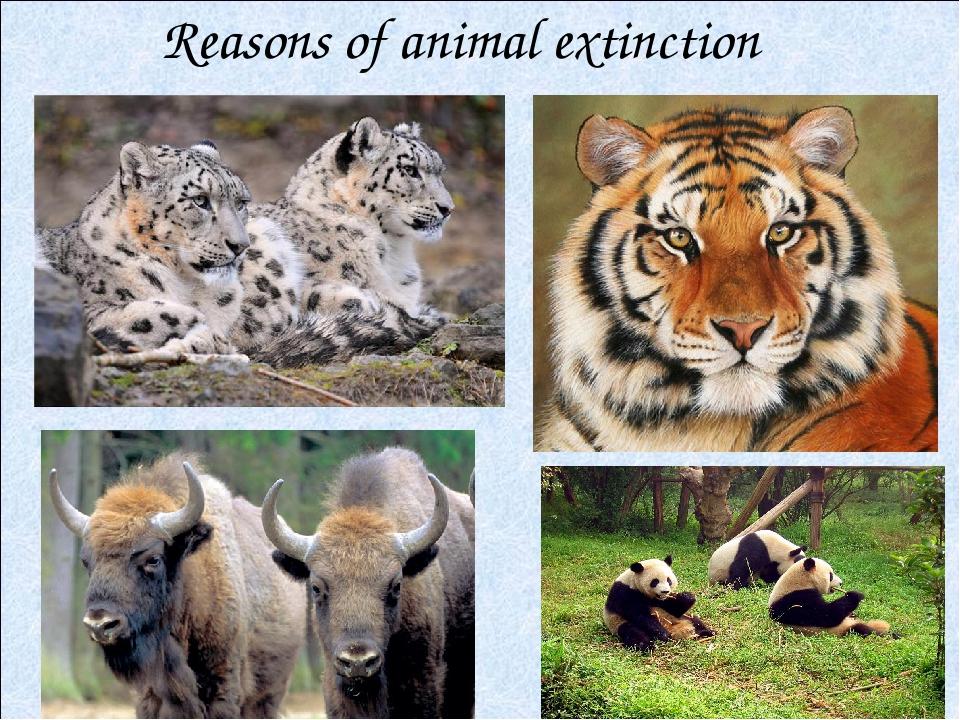 Reasons of animal extinction