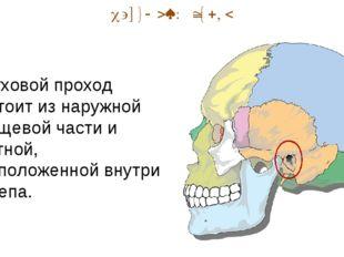 Наружный отдел Слуховой проход состоит из наружной хрящевой части и костной,
