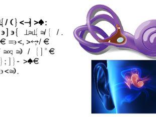 Вестибулярный аппарат состоит из двух маленьких мешочков и трёх полукружных к