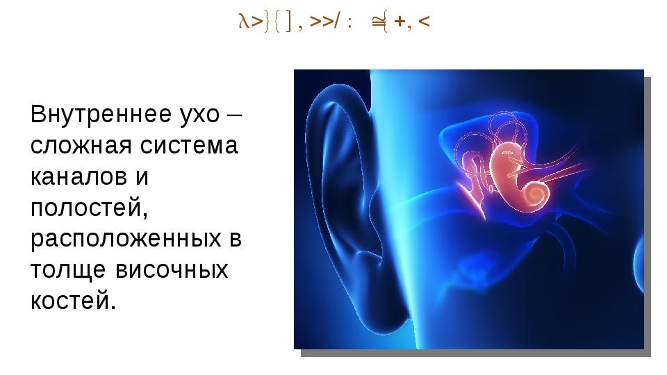 Внутренний отдел Внутреннее ухо – сложная система каналов и полостей, располо...