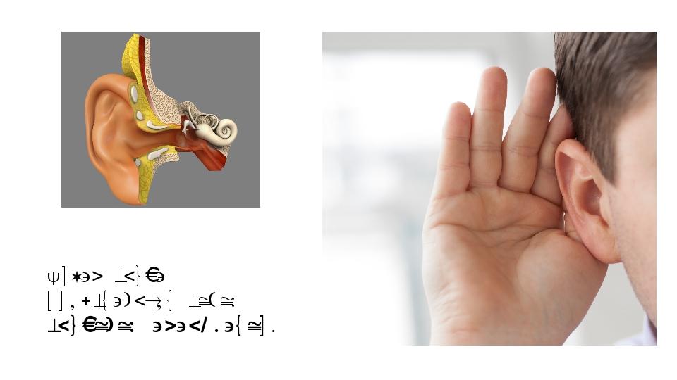 Орган слуха представляет собой слуховой анализатор.
