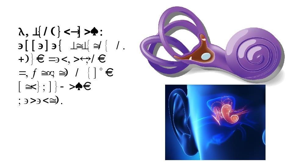 Вестибулярный аппарат состоит из двух маленьких мешочков и трёх полукружных к...