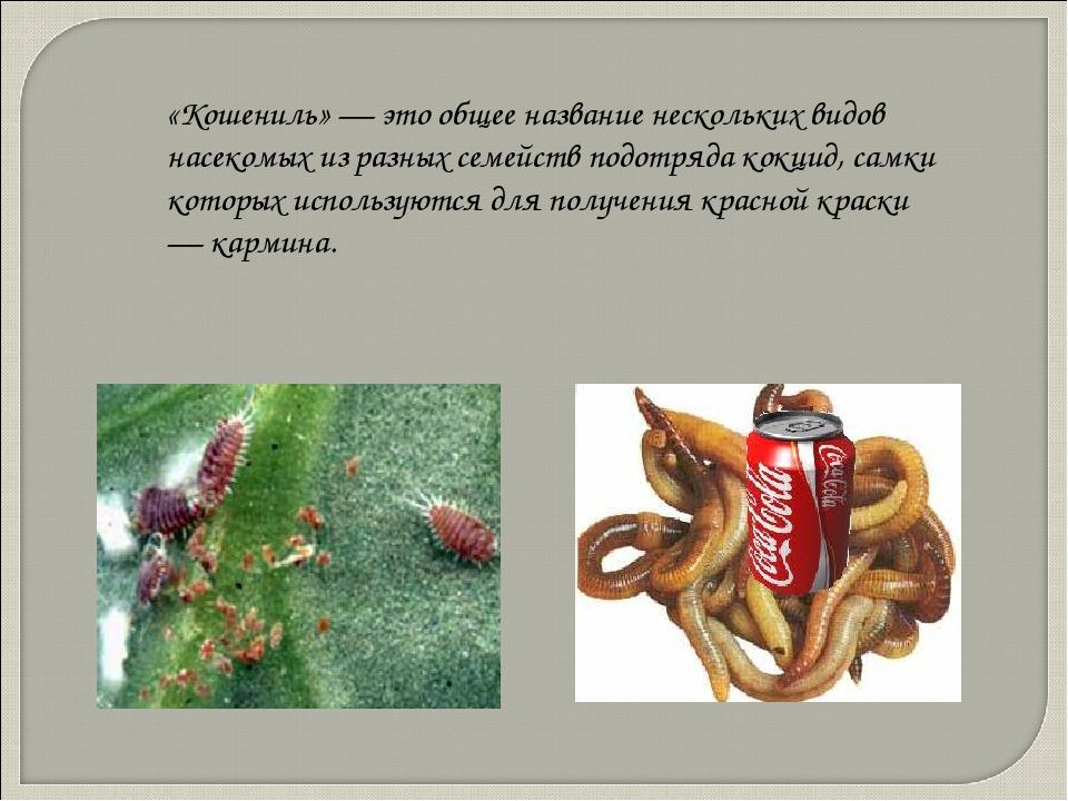 «Кошениль» — это общее название нескольких видов насекомых из разных семейств...