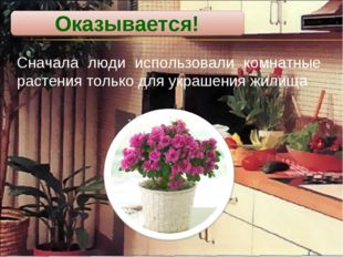 Сначала люди использовали комнатные растения только для украшения жилища Оказ