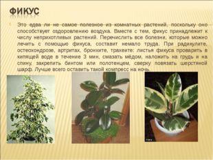 Это едва ли не самое полезное из комнатных растений, поскольку оно способству