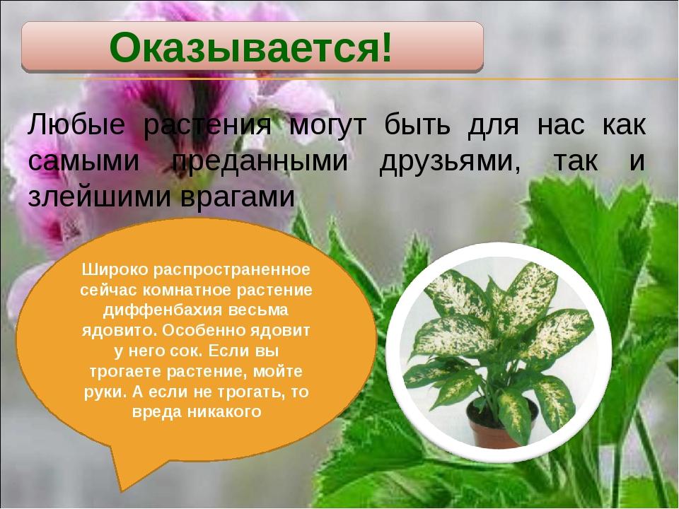 Оказывается! Любые растения могут быть для нас как самыми преданными друзьями...