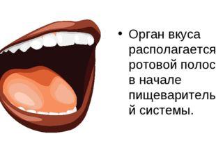 Орган вкуса располагается в ротовой полости, в начале пищеварительной системы.