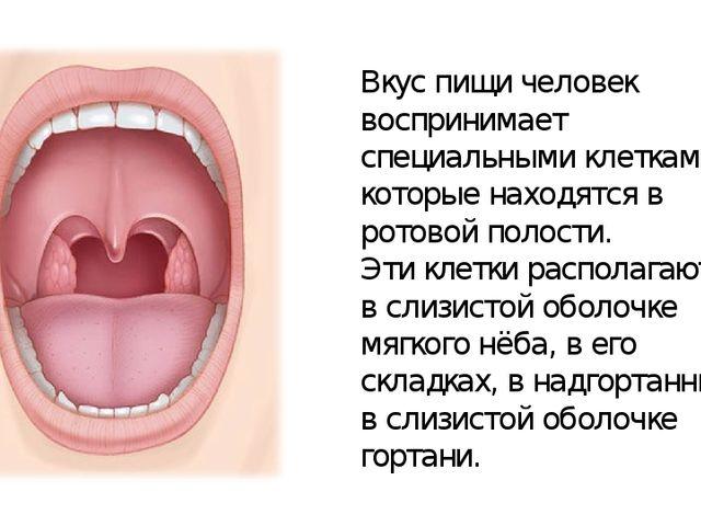 Вкус пищи человек воспринимает специальными клетками, которые находятся в рот...