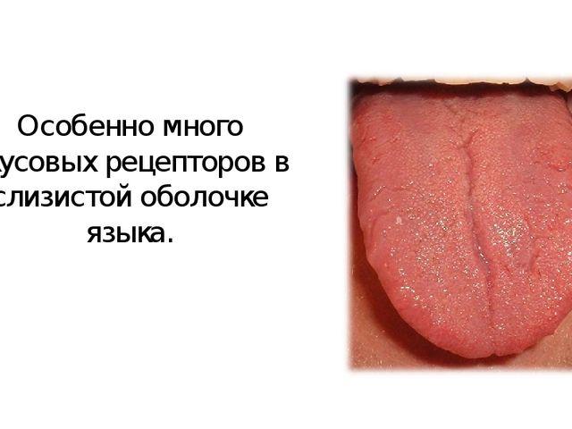 Особенно много вкусовых рецепторов в слизистой оболочке языка.
