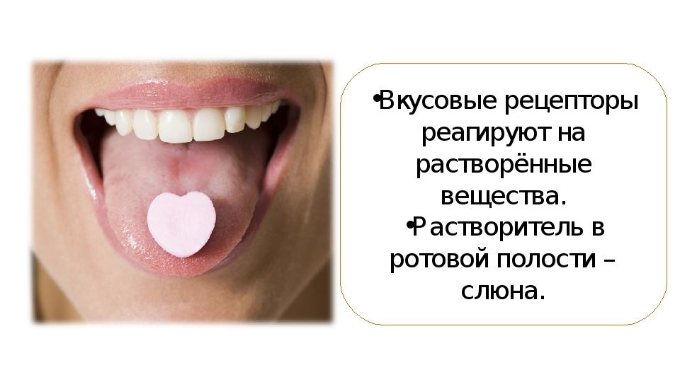Вкусовые рецепторы реагируют на растворённые вещества. Растворитель в ротовой...