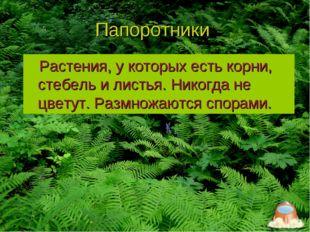 Папоротники Растения, у которых есть корни, стебель и листья. Никогда не цвет