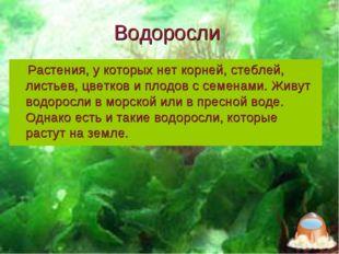 Водоросли Растения, у которых нет корней, стеблей, листьев, цветков и плодов