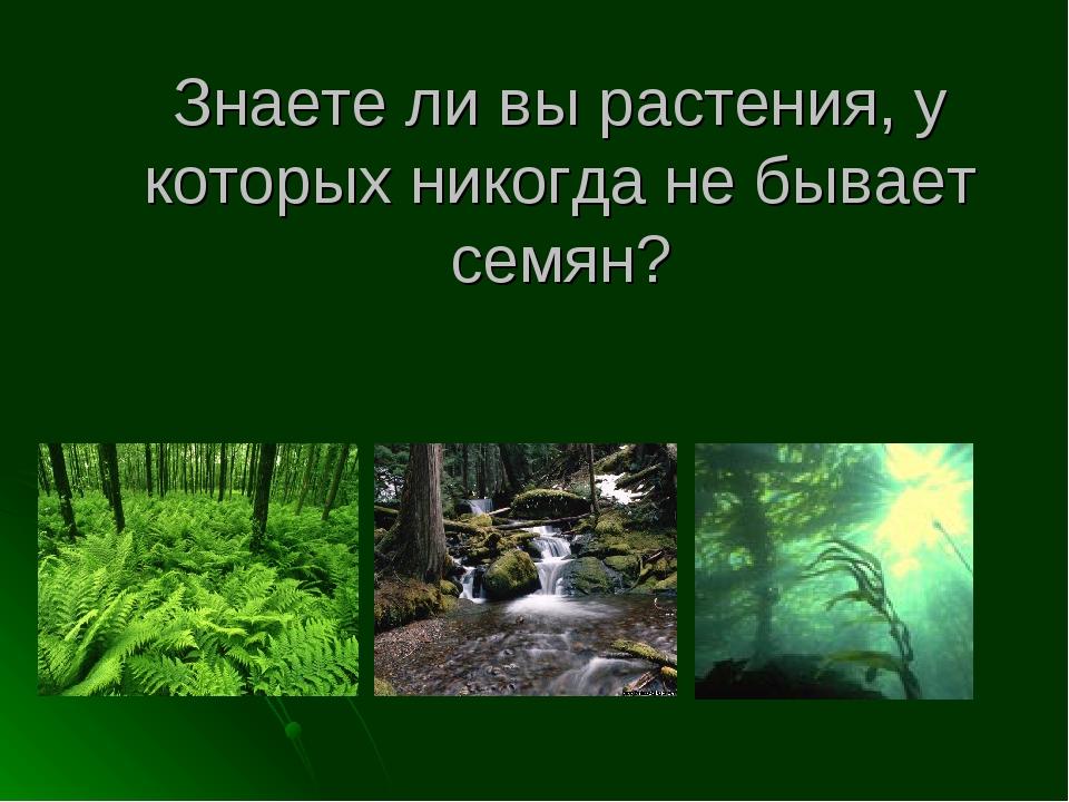 Знаете ли вы растения, у которых никогда не бывает семян?