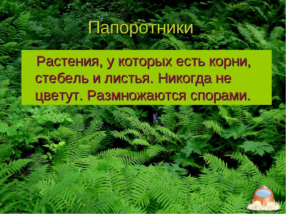 Папоротники Растения, у которых есть корни, стебель и листья. Никогда не цвет...