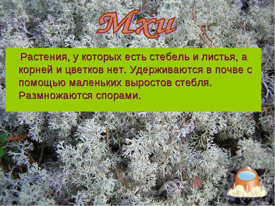 Растения, у которых есть стебель и листья, а корней и цветков нет. Удерживаю...