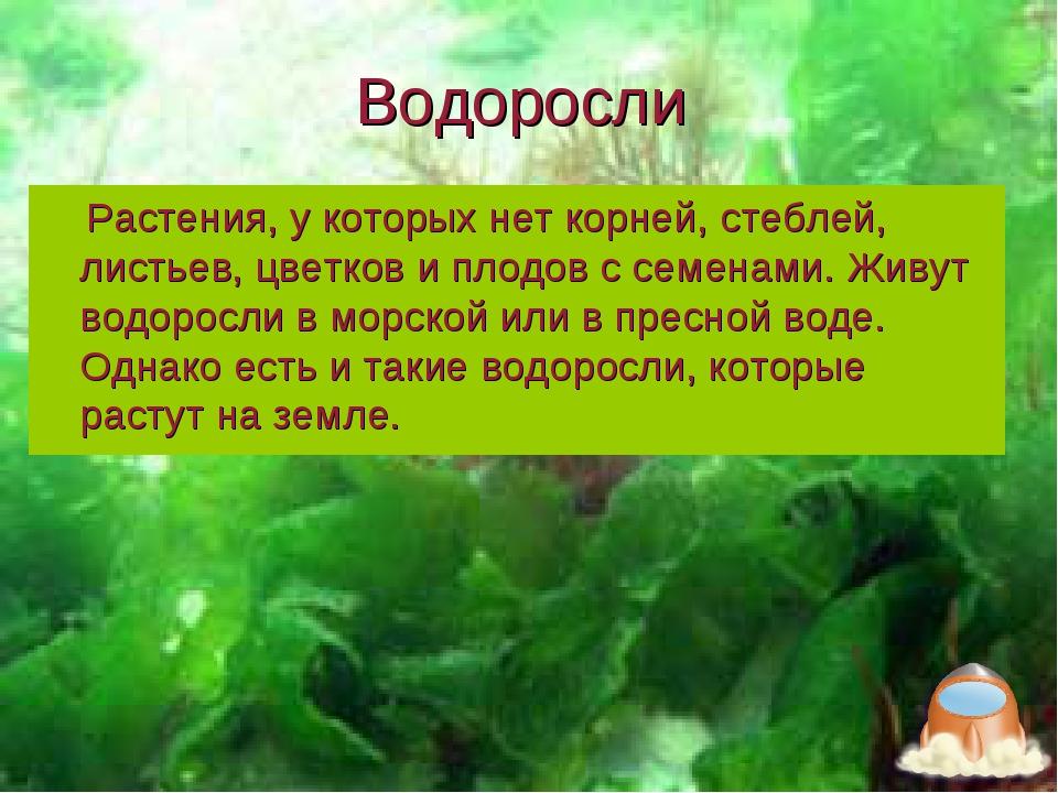Водоросли Растения, у которых нет корней, стеблей, листьев, цветков и плодов...