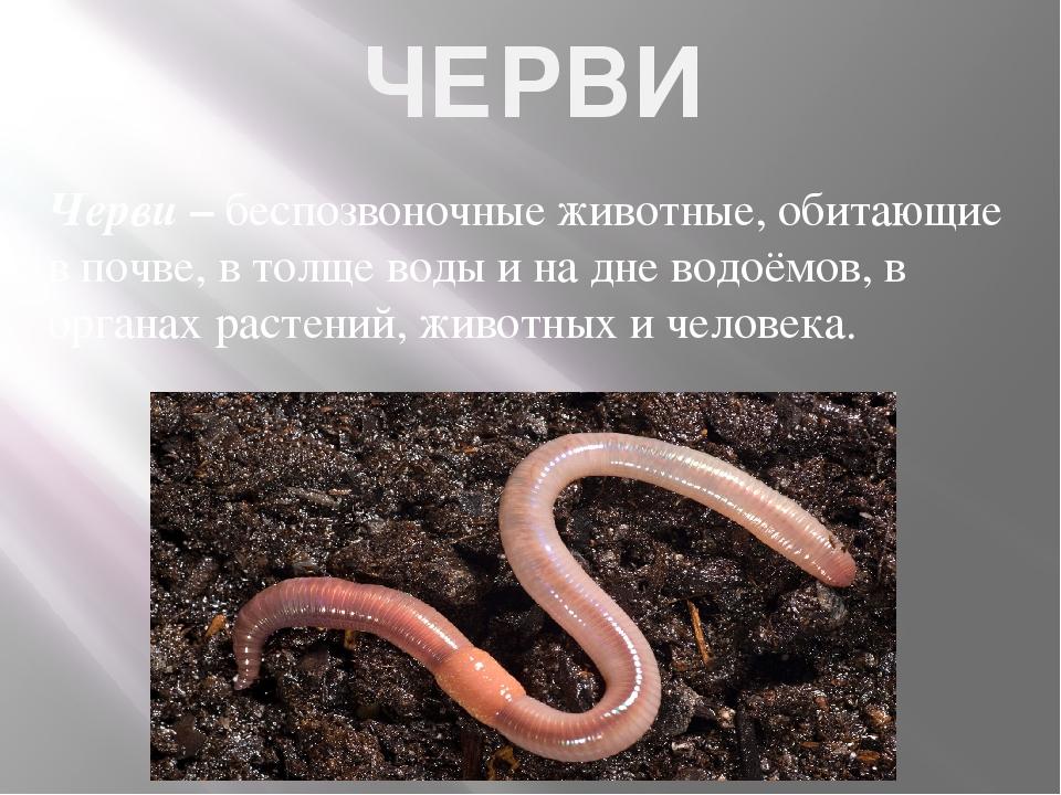 ЧЕРВИ Черви – беспозвоночные животные, обитающие в почве, в толще воды и на д...