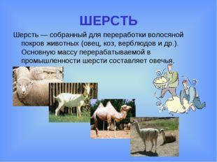 ШЕРСТЬ Шерсть — собранный для переработки волосяной покров животных (овец, ко