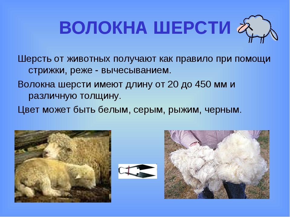 ВОЛОКНА ШЕРСТИ Шерсть от животных получают как правило при помощи стрижки, ре...