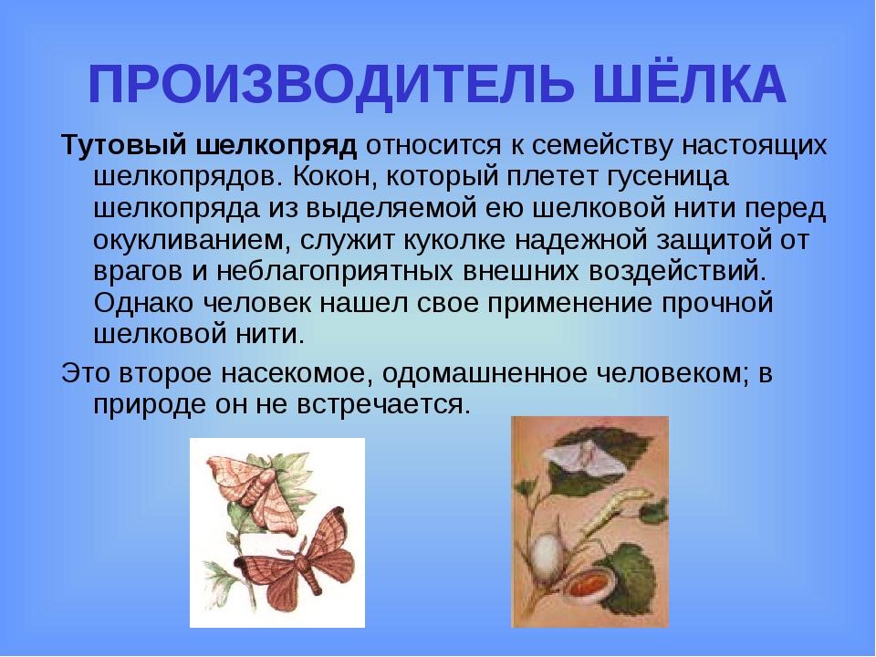 ПРОИЗВОДИТЕЛЬ ШЁЛКА Тутовый шелкопряд относится к семейству настоящих шелкопр...