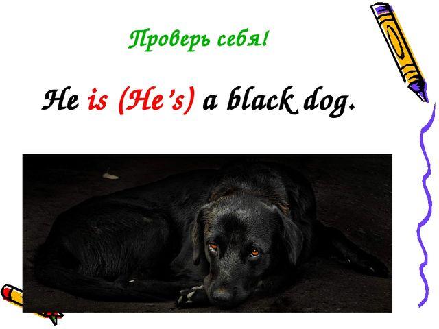 Проверь себя! He is (He's) a black dog.