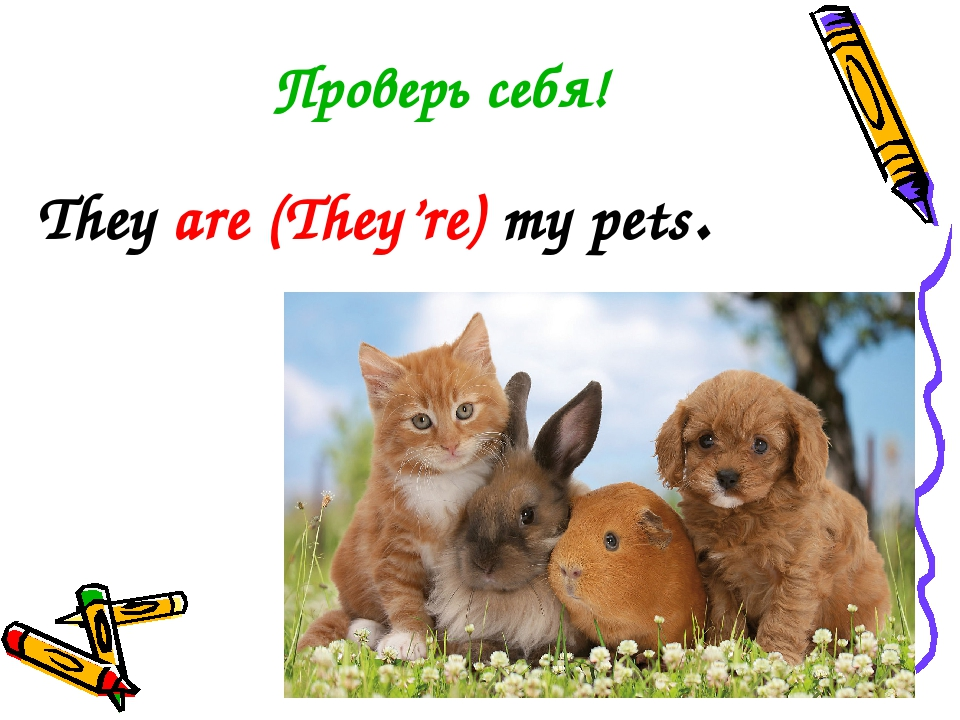 Проверь себя! They are (They're) my pets.