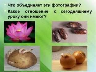 Что объединяет эти фотографии? Какое отношение к сегодняшнему уроку они имеют?