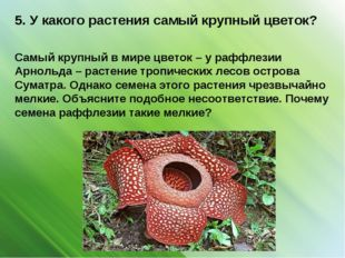 5. У какого растения самый крупный цветок? Самый крупный в мире цветок – у ра