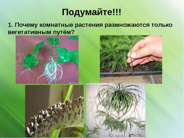Подумайте!!! 1. Почему комнатные растения размножаются только вегетативным пу...