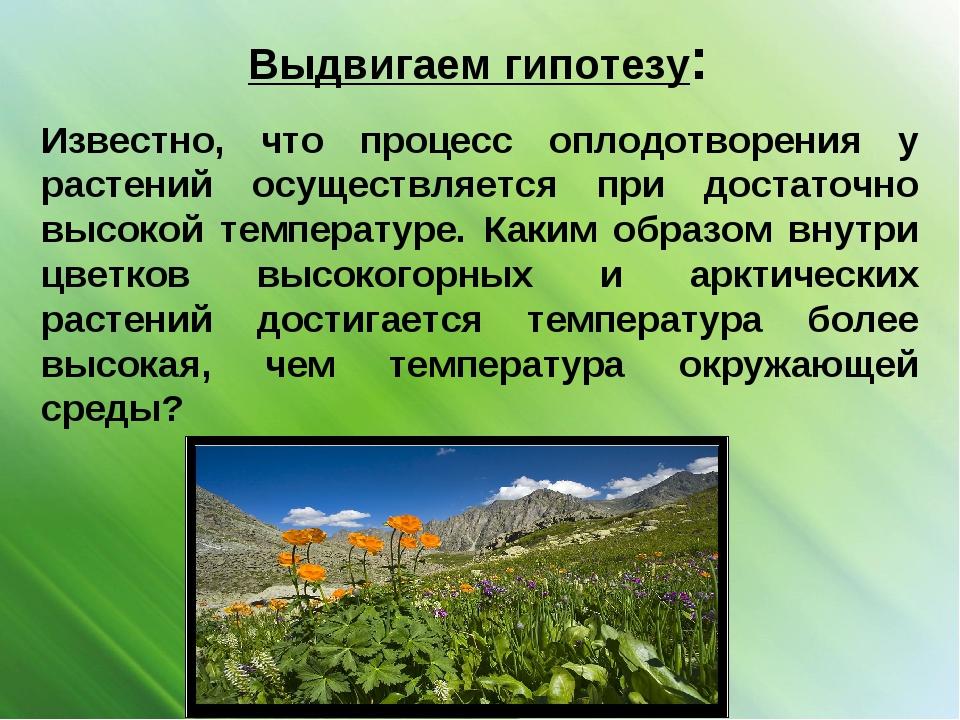 Выдвигаем гипотезу: Известно, что процесс оплодотворения у растений осуществл...