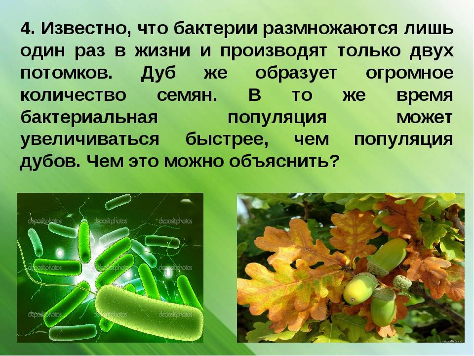 4. Известно, что бактерии размножаются лишь один раз в жизни и производят тол...