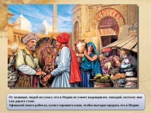 От знающих людей он узнал, что в Индии не умеют выращивать лошадей, поэтому о