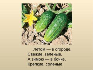 Летом — в огороде, Свежие, зеленые, А зимою — в бочке, Крепкие, соленые.