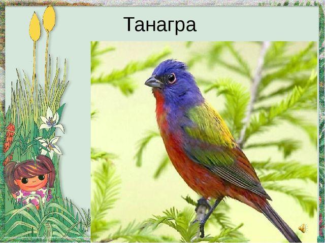 Танагра