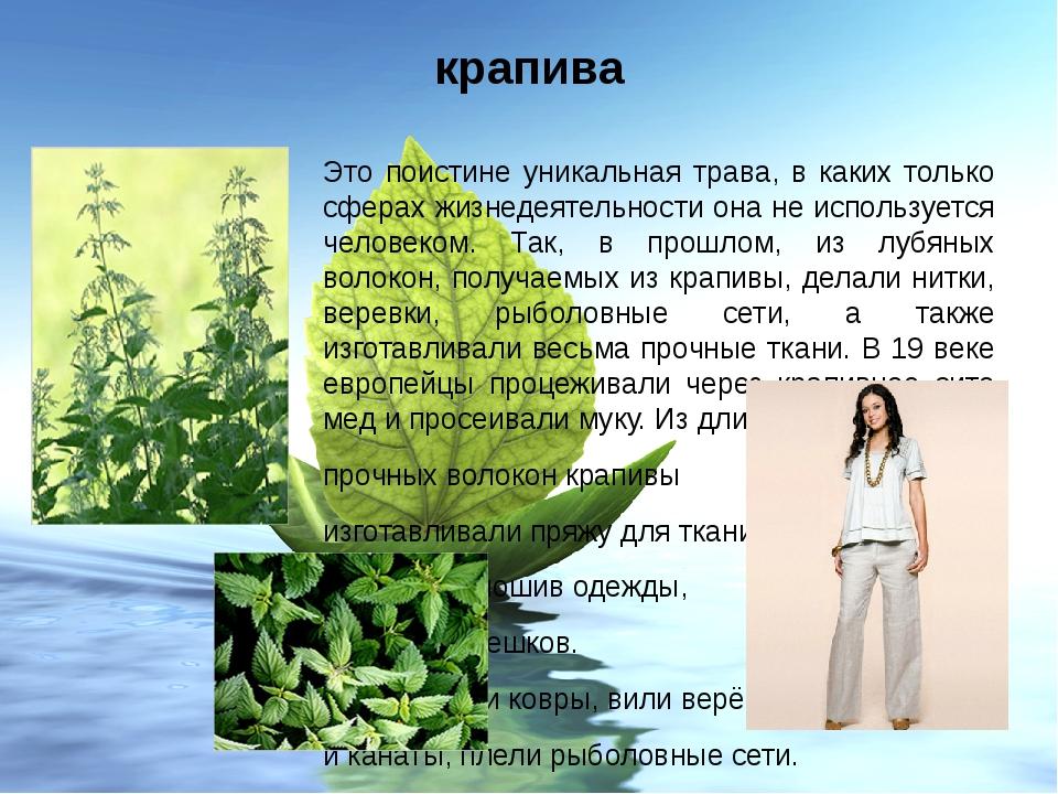 крапива Это поистине уникальная трава, в каких только сферах жизнедеятельност...
