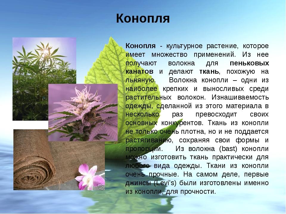 Конопля Конопля - культурное растение, которое имеет множество применений. Из...
