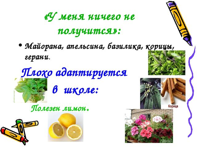 «У меня ничего не получится»: Майорана, апельсина, базилика, корицы, герани....