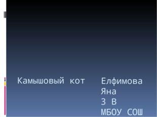 Камышовый кот Елфимова Яна 3 В МБОУ СОШ №48