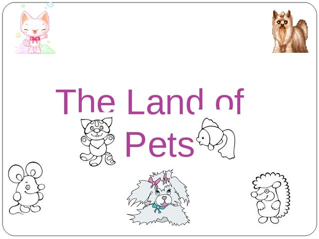 The Land of Pets