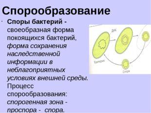 Цианобактерии (сине-зелёные водоросли)— значительная группа крупных прокарио