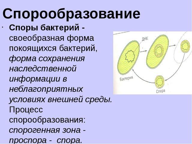 Цианобактерии (сине-зелёные водоросли)— значительная группа крупных прокарио...